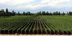 Dominio del Plata winery, Finca Wölffer Rosé, viñedos en Mendoza, AR