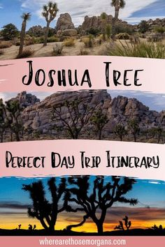 Plan your Joshua Tree day trip from Los Angeles or San Diego with this awesome one day itinerary perfect for first time visitors! The best hikes, viewpoints and stop offs, campground options if you're staying the night and how to get to Joshua Tree National Park. Things to do in Joshua Tree | Joshua Tree hikes | Joshua Tree Itinerary | California Road Trip | USA National Parks #Joshuatree #usanationalparks #californiatravel #californiaroadtrip California National Parks, National Parks Usa, Joshua Tree National Park, California Travel, Joshua Tree Hikes, Best Travel Guides, Best Hikes, Road Trip Usa, Stay The Night