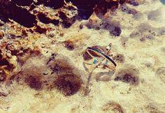 #sea #summer2016 #croazia #ring #marcellopane