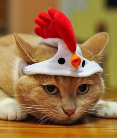 """""""I hate being the first one up. Worst costume idea ever."""" Man!  That is one patient cat!"""