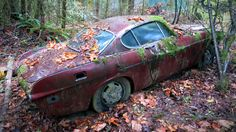 Forest Find Volvo P1800 Update! - http://barnfinds.com/forest-find-volvo-p1800-update/