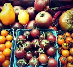 Tomato Harvest #UMass #Permaculture Black Cherry, Sungold, and Heirloom tomatoes!