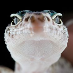 This isn't my baby lizard but I still love it :)