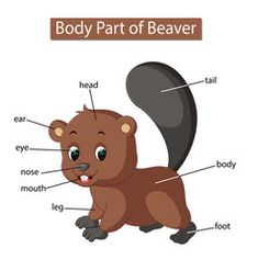 Diagram showing body part beaver vector English Activities For Kids, Farm Activities, Infant Activities, Preschool Lesson Plans, Preschool Worksheets, Toro Vector, Animals Name In English, Beaver Tails, Alphabet Pictures