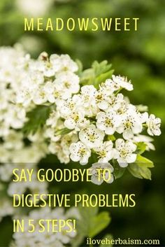 Meadowsweet is considered one of the most important digestive remedies, indicated for many conditions of the gut, particularly those associated with inflammation and excess acidity.  Meadow sweet has a balancing effect on acid production in the stomach as well as a soothing and healing effect on the upper digestive tract.