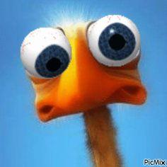 Funny Animal Memes, Funny Animal Videos, Funny Animal Pictures, Funny Animals, Animated Emoticons, Animated Gif, Funny Videos, Minion Gif, Gif Bonito