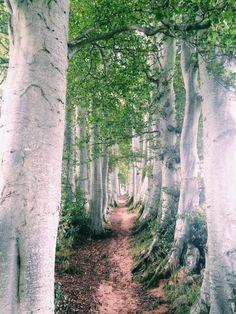 Tarland, Chasing Daylight, Scotland Walks, Aberdeenshire