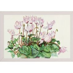 Charlton Home 'Pink Cyclamen' Print Format: White Wood Medium Framed Paper
