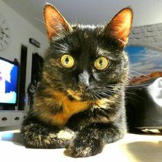 Testen der neuen Kamera 😊  .  .  .  #amy #kameratest #catsofinstagram #instacat #camera #kamera #cameratest #panasonic #panasoniclumix #lumix #lumixtz81 Camera Test, Cats Of Instagram, Amy, Indie, Pictures, Animals, Photos, Animales, Animaux