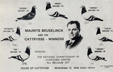 The Cattrysse brothers (Moere, BE) as recorded in 1951 – Part III | Pigeon…