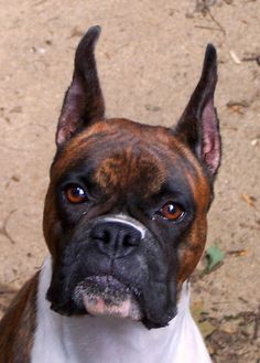 becca face by jembox, via Flickr Beautiful boxer face......
