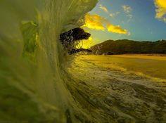 surf dog brazil
