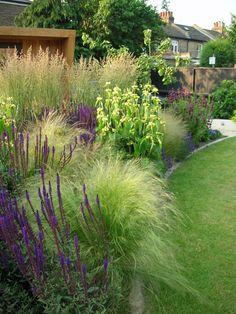 Tall Calamagrostis at the back Evergreen Landscape, West London, Garden Design, Plants, Flora, Backyard Landscape Design, Landscape Designs, Plant, Yard Design
