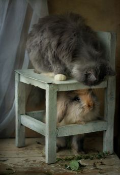 llbwwb:    Bunny and the Kitty by Татьяна Ушакова.You write the caption.Whats the Story?
