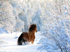 Winter & Horse : Just a dream ! Pretty Horses, Horse Love, Beautiful Horses, Animals Beautiful, Simply Beautiful, Animals And Pets, Cute Animals, Winter Horse, Work Horses