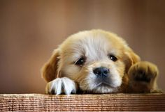 Ten Cutest Puppies In The World