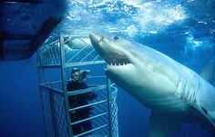 Australia - scuba diving with sharks. A dream of mine