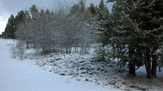 Beautiful snowy day!