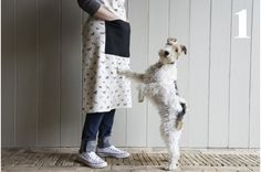 Bertie from Plum and Ashby Fox Terriers, Chien Fox Terrier, Wirehaired Fox Terrier, Wire Fox Terrier, Plum And Ashby, Border Terrier Puppy, Wire Haired Terrier, Parson Russell Terrier, Cute Creatures