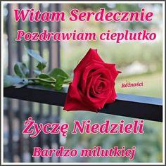 Rose, Flowers, Plants, Neon, Pink, Roses, Florals, Plant, Flower