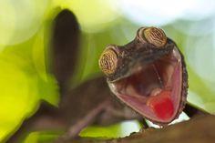 Check this funny animal here: http://funnypicsofanimals.com/post/141656071085 #funny #animal #lol #haha #gif #fail