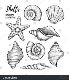 Find Hand Drawn Vector Illustrations Collection Seashells stock images in HD and millions of other royalty-free stock photos, illustrations and vectors in the Shutterstock collection. Tattoo Sketches, Tattoo Drawings, Art Drawings, Realistic Drawings, Starfish Drawing, Seashell Drawings, Sea Drawing, Seashell Tattoos, Beachy Tattoos