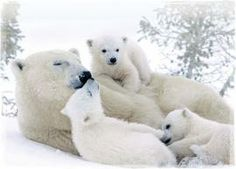 Protect polar bears and their cubs  Give a great big bear hug to someone special. Your gift will help NRDC fight in court to save the polar bear's home from Arctic oil development and global warming.