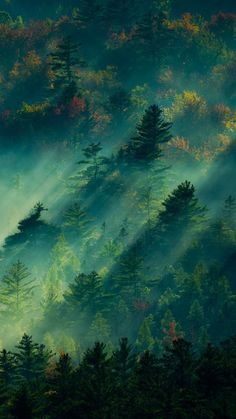 Foggy landscape pine tree green i wallpaper, mobile wallpaper, nature wallpaper, wallpaper backgrounds Scenery Wallpaper, Wallpaper Backgrounds, Mobile Wallpaper, Forest Wallpaper, Green Nature Wallpaper, Beautiful Wallpaper, Landscape Photography, Nature Photography, Fantasy Landscape