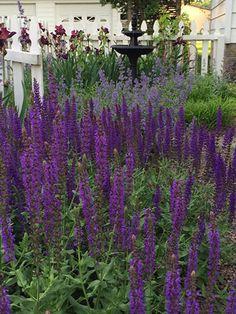 Garden path ideas! #smithscountrygardens Path Ideas, Garden Paths, Will Smith, Photo Galleries, Gardens, Country, Gallery, Plants, Rural Area
