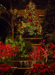 Longwood Christmas at Night: The 1000 Ornament Tree by Entropic Remnants - beautiful photo
