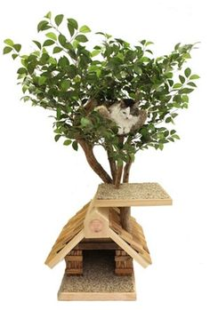 Love these cat tree trees! http://media-cache0.pinterest.com/upload/274790014733932578_VtWaOtQh_f.jpg cattoys cat stuff for the home