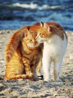 Sweet cats hugging on a beach.