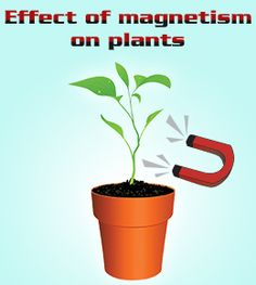 Effect of magnetism on plant growth