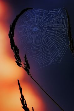 I really DON´T like spiders... But this is amaizing...
