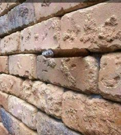 New Wall Optical Illusion Answer