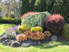 A GUIDE TO NORTHEASTERN GARDENING: Garden Bloggers' Bloom Day & Foliage Follow-Up June 2014: Long Island Garden and 150th Post!