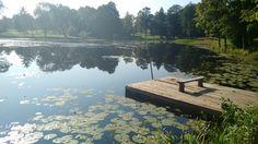 A random pond in Latvia