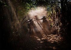 Photographe Weerapong Chaipuck __7-merveilleuse-asie