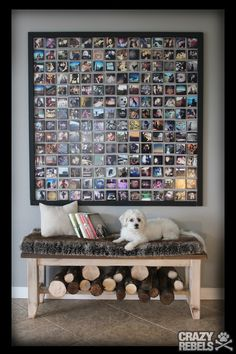 Picture of a dog with her Instagram wall of dog pics. #Instagramart #DIY #maltese