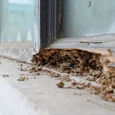 Spring hasn't quite sprung yet officially, but outdoor temperatures are reaching 70 degrees, which means termite season is here 👎 Make sure your home is not being eaten alive at this very moment! Give Terminator a call for a routine inspection. It could save you thousands in damage! 👀 More information on termites: www.goterminator.com/blog/termite-season-is-here #TerminatorTPC #TermiteSeason #TermiteTips #TermiteControl Termite Pest Control, Termite Damage, Fix Leaky Faucet, Signs Of Termites, Termite Inspection, Climate Change Effects, Temperature And Humidity, Animals, Tips