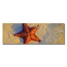 Trademark Art 'Starfish' by Preston Framed Photographic Print on Wrapped Canvas Size: 16 H x 47 W x 2 D Framing Photography, Fine Art Photography, Canvas Wall Art, Canvas Prints, Artist Canvas, Art Reproductions, Preston, Wrapped Canvas, Frame