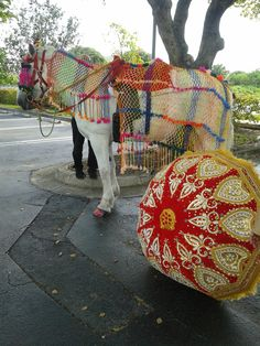 Shows the Costume and Umbrella for Baraat. .