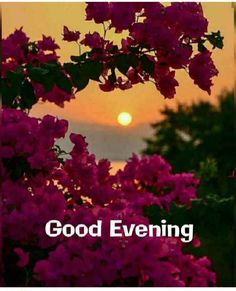Good Evening Messages, Good Evening Wishes, Evening Greetings, Night Wishes, Morning Quotes For Him, Morning Greetings Quotes, Good Night Quotes, Roses For Her, Flowers For You