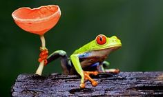 Win a holiday to Costa Rica in our readers' travel photography competition   Travel   The Guardian