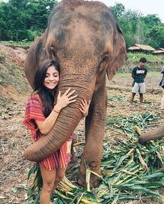 ❤️ Oh so much love❤️ best bonding experience❤️.Lets care about the welfare of the elephants in Thailand and around the world!!! NO RIDING!!!! . . #thailand #chiangmai #thailandluxe #elephant #love #favanimal #lovable #experience #best #animallover #animal # #becaring #protectanimals #bestofthailand #backpackerstory #noridingelephants #jkvtravels
