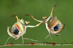 Highlights from the 2014 Sony World Photography Awards Shortlist nature contests That's dance. © Hasan Baglar, 2014 Sony World Photography Awards World Photography, Photography Awards, Wildlife Photography, Amazing Photography, Learn Photography, National Geographic, Digital Foto, Digital Camera, Powerful Pictures