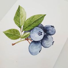 Botanical Flowers, Botanical Art, Botanical Drawings, Fruit Art, Media Images, Tole Painting, Watercolor Paintings, Watercolour, Medium Art