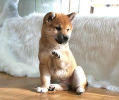 @Jaime Hendrix, we will have one! haha i miss bear already