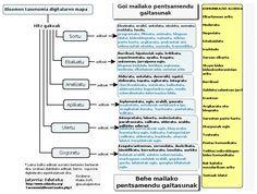 Bloomen taxonomia digitalaren mapa (maitego.com)