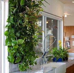 Woolly Pockets can be hung directly on the wall so that you can introduce plant life to virtually any room. Since there's a military-grade moisture barrier to protect your walls from seepage, you can experiment with no fear of causing water damage.